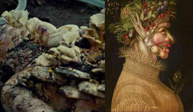 """A mulher-cogumelo de """"Ambouse-Bouche"""" e a mulher-vegetal de Verão, tela de Arcimboldo."""