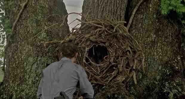 Sob a árvore da morte.